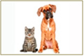 Pets and Animals 120x80.jpg