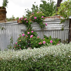 Millthorpe_Garden_Ramble-143x143
